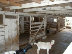 The Hay Racks Are Mounted In A Way That Two Stalls Can Share One Rack More Areas To Eat Peaceful Life Is Goat Land