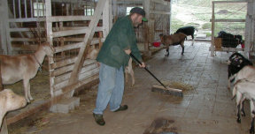 sweeping the barn